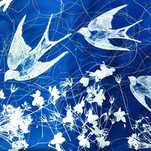 Introduction to Cyanotype
